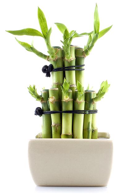 bambu_02b
